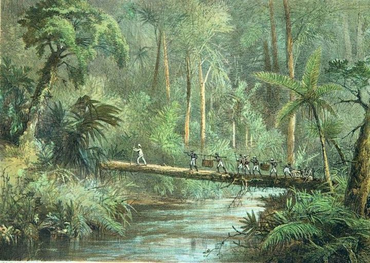 gambar ilustrasi naturalis